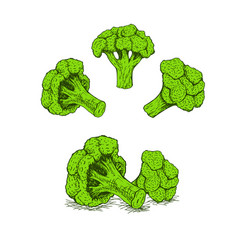 Hand drawn set of broccoli sketch vector