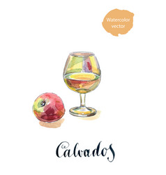 glass of calvados with red apple vector image