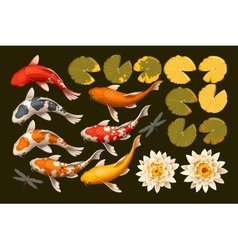 Set of koi fish and lotus vector