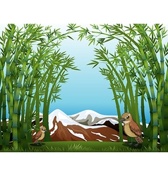 A bamboo forest view vector