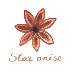 Watercolor star anise on the white background vector