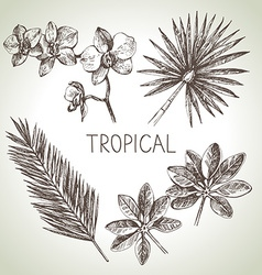 Hand drawn sketch tropical plants set vector