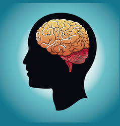 Profile head brain human vector