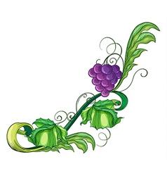 A vine fruit vector image