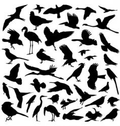 birds set vector image vector image