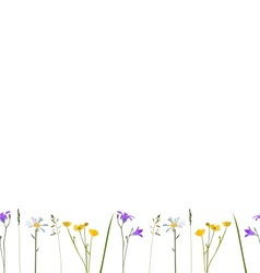 Seamless pattern wild flowers vector image
