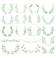 herbs plants and flowers branches laurels vector image