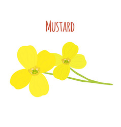 Mustard flowerorganic condimentflat style vector