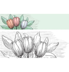 Spring tulips vector