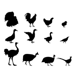 Poultry silhouettes vector