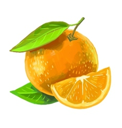 Picture of orange vector