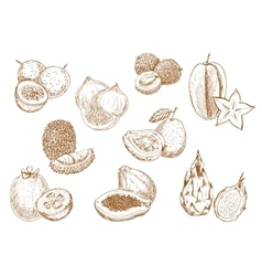 Sweet and juicy exotic fruits sketch icons vector