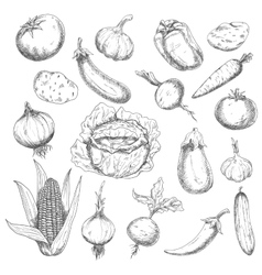 Healthy food sketch design with fresh vegetables vector image