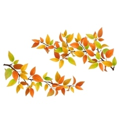 Tree branch with autumn leaves vector image