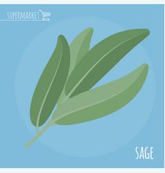 Sage flat design icon vector