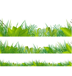 seamless jungle and tropical vegetation vector image