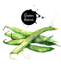 Green beans hand drawn watercolor painting on vector