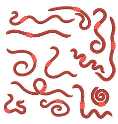 animal earth red worms for fishing vector image vector image