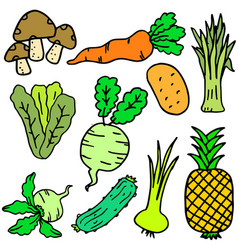 Doodle of vegetable various colorful vector