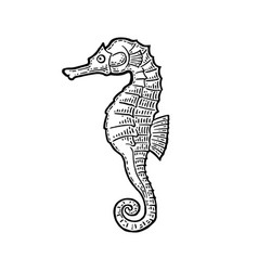 Sea horse black engraving vintage vector