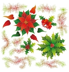 Christmas set of plants with flowers vector image vector image