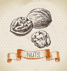 Hand drawn sketch nut vintage background of vector