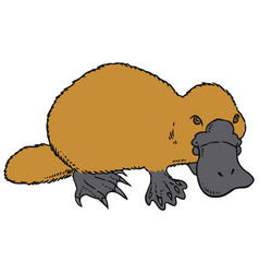Cute platypus - duckbill vector