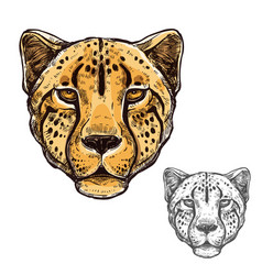 cheetah muzzle african wild animal icon vector image vector image