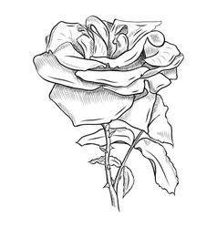 Flower sketch vector