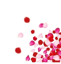Rose petals falling background for presentations vector