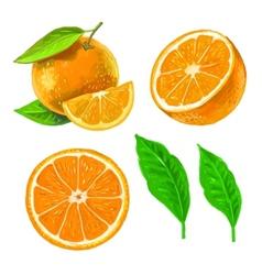 Picture of orange vector