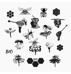 Set for honey sketches 4 vector image vector image