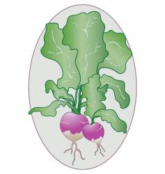 Turnip greens vector