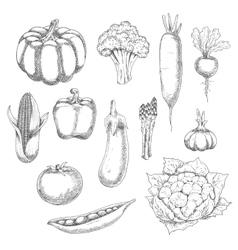 Organic vegetables sketch for agriculture design vector image vector image