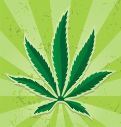 cannabis leaf icon vector image vector image