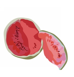 Watermelon isolated on white vector