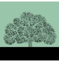 sketch of apple tree vector image