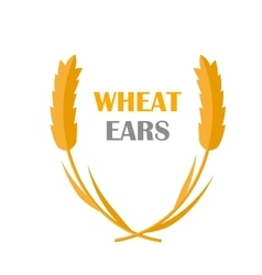 Wheat ears concept in flat design vector