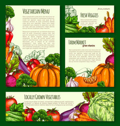 Vegetables havest banners and posters set vector