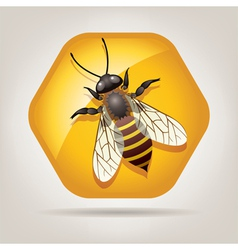 Bee on honeycell vector