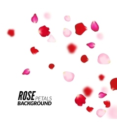 Rose petals background for presentations vector