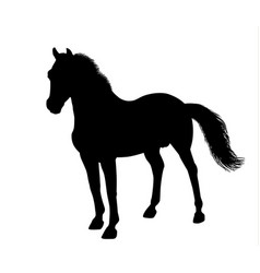 Silhouette of a standing horse vector