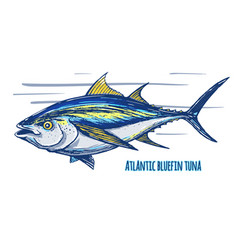 Atlantic tun vector