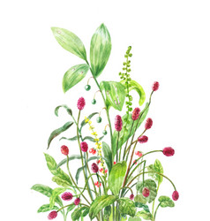 Burnet lily of the valley stone bramble vector
