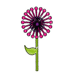 Cute exotic flower dandelion vector