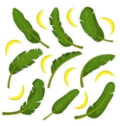 Tropical Leaves With Bananas vector image vector image