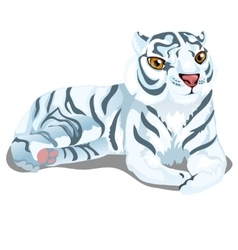 Striped white bengal tiger in cartoon style vector