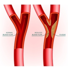 Blood vein image vector