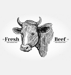 Hand drawn cow head vector image