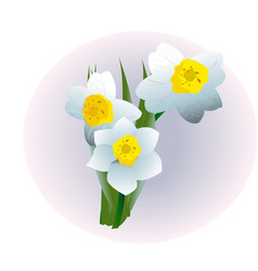 Spring flower narcissus isolated on white vector